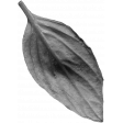 Flowers No.26 – Leaf 06 Template