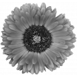 Flowers No.28-02 template
