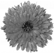 Flowers No.28-04 template