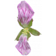 Flowers No.29-09