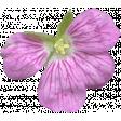 Flowers No.29-10