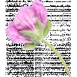Flowers No.29-12