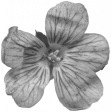 Flowers No.29-06 template