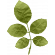 Buried Treasures - Leafy Branch