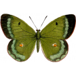 Our House Garden,Elements - Green Butterfly