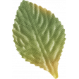 One Of A Kind - Leaf