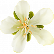 Be Bold Elements - Single Spring Fabric Flower