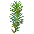 A Little Sparkle {Elements} - Green Yew Branch