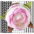 Flowers No. 1 - Flower 5