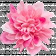 Flowers no 4 - Flower 05