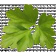 KMRD-Spicy Chili-leaf1