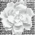 KMRD-202105DC-Cherry Blossoms-flower1