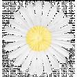 KMRD-202104DC-A Bee In My Bonnet-flower3