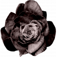 ps_paulinethompson_masculine_flower 3