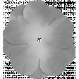 Silk Flower Template 016