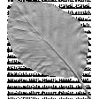 Leaf Template 090