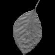 Leaf Template 092
