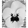 Flower Template 012
