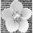 Flower Template 014