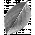 Leaf Template 093