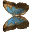 Back To Nature - Blue Butterfly