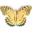 Back To Nature - Yellow Butterfly