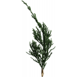 Back To Nature - Pine Sprig