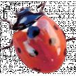 Back To Nature - Ladybug 2