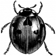 Insect Stamp Template 044