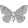 Butterfly Template 063