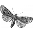 Butterfly Template 064