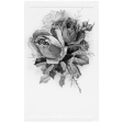Postcard Template 009