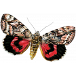 Spring Day - Red and Black Butterfly