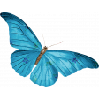 Raindrops & Rainbows - Teal Butterfly