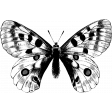Insect Stamp Template 055