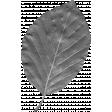 Leaf Template 115
