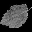 Leaf Template 116