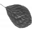 Leaf Template 117