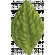 Slice of Summer - Green Leaf
