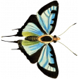 At the Zoo - Blue Butterfly 02