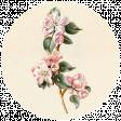 Apple Crisp - Apple Blossom Brad Disk 04
