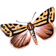 Day of Thanks - Orange Butterfly 02
