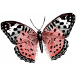Love Knows No Borders Mini - Butterfly