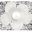 Fresh - White Flower 02