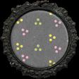All the Princesses - Gray Dot Brad