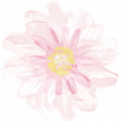 All the Princesses - Painted Pink Flower 01