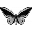 Butterfly Template 079