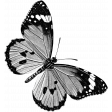 Butterfly Template 080