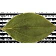 Fall Into Autumn - Dried Leaf