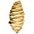 Fall Into Autumn - Add On - Pinecone